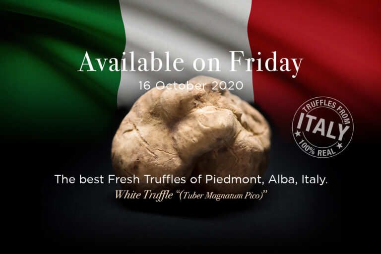 The finest fresh white truffles in season straight from Alba Italy  to Thailand